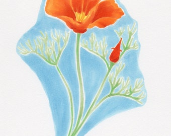 California Poppy - original drawing