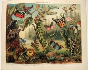 Natural Defenses - Original 1907 Chromo-Lithograph by Meyers. Schutzeinrichtungen. Butterflies Moths Beetles Caterpillars. Antique
