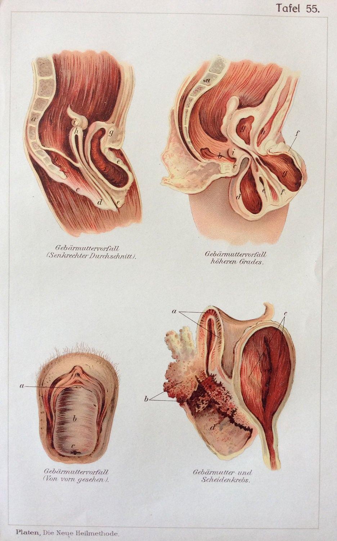 Charmant Weibliche Anatomie Diagramm Für Kinder Fotos - Anatomie Von ...