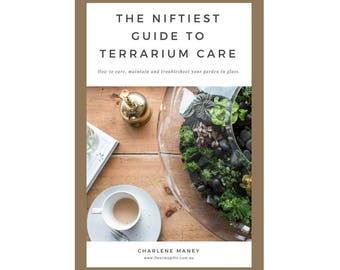 The Niftiest Guide to Terrarium Care