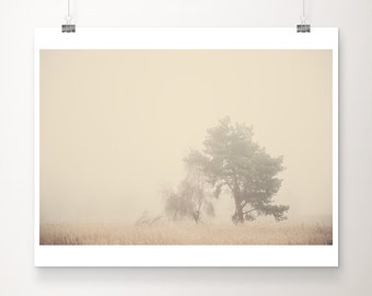 tree photograph nature photography fog photograph winter photograph cream home decor tree print winter print botanical print