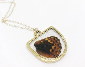 Spotted butterfly wing in gold pendant on chain