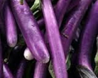 Japanese Pickling Eggplant 10 Seeds Sweet and mellow flesh, long fruits