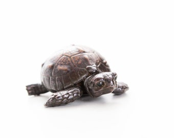 Tortoise hatchling on the move. Open edition bronze.