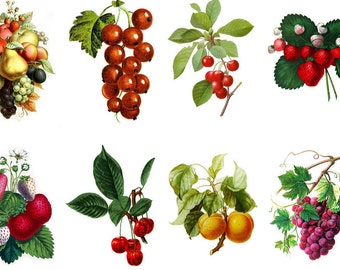 """Large Stickers (each sticker 2.5""""x3.5"""", pack 8 stickers) Scrapbooking Craft Vintage # Berries and Fruit FLONZ 167"""