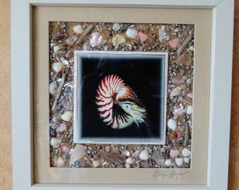 Nautilus - Framed Beneath the Sea Shell