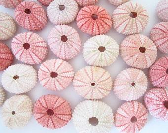 Pink Sea Urchin - set of 10-Beach Wedding Decor-Sea Shells Bulk-Beach Home Decor-Seashell Crafts-Sea Urchin-Beach Wedding Favors-Urchin