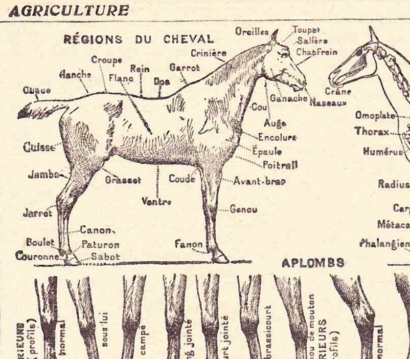 Antique French Print Dictionary Page 1920s Illustration Horse ...