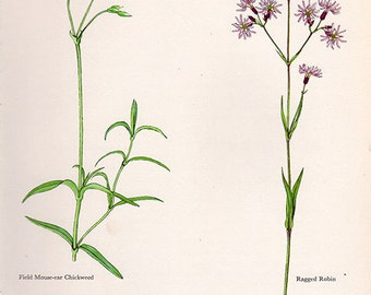 ANTIQUE BOTANICAL PRINT flowers and plants 40