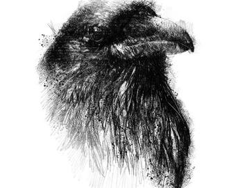 Raven sketch | Limited edition fine art print from original drawing. Free shipping.