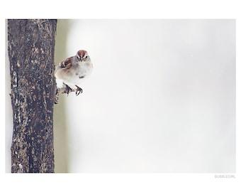 Nature Photography PRINT, Perching Sparrow, Wall Art