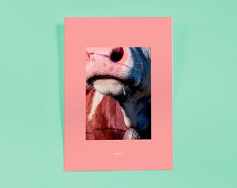 Kauing Cow I — art Print | Artwork | Poster Series | Finer Exclusive Print, Limited