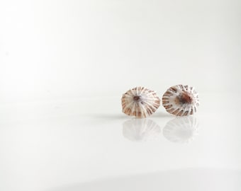 Mini Ophihi Stud Earrings, Hawaiian Shell