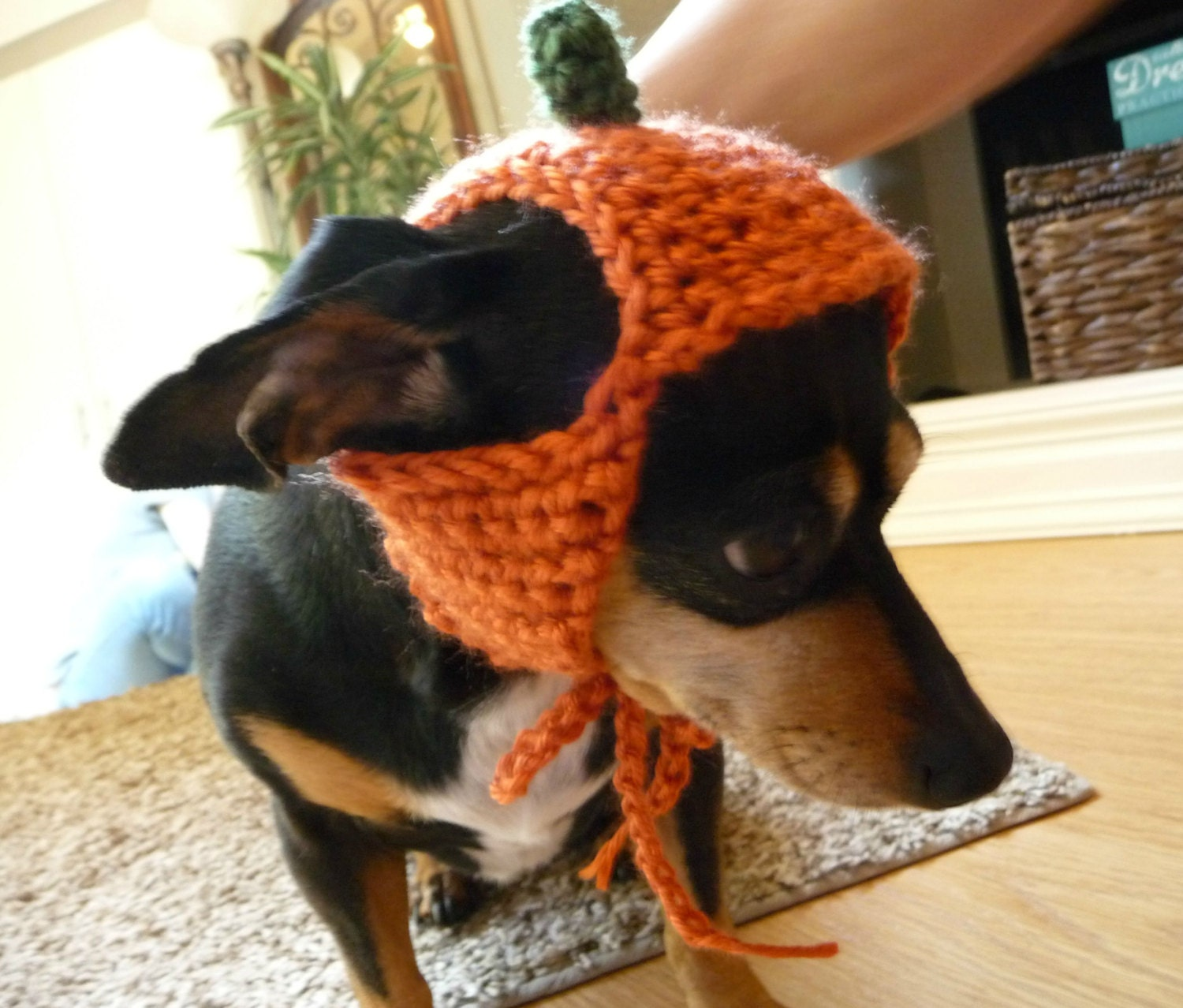 Contemporary Crochet Dog Hat Patterns Picture Collection - Sewing ...