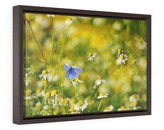 Blue butterfly wall art, framed meadow canvas print, white flowers nature photography, botanical wall decor