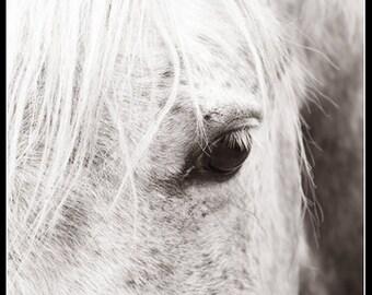 White Horse Black and White Sephia toned Photographic Fine Art Print