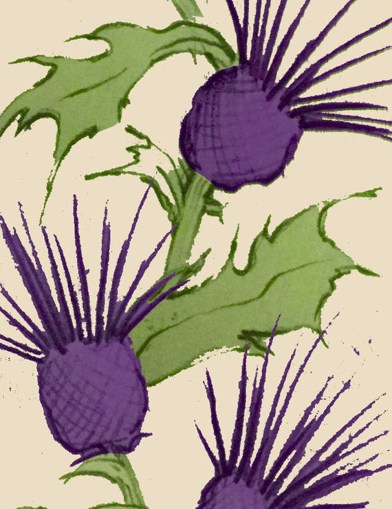 wallpaper sample a4 thistle print self adhesive wallpaper