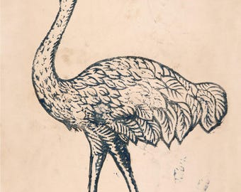 Limited edition poster ostrich - Indus