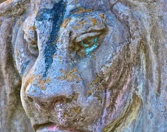 5x7 the Graceful Oaks- City Park Lion 1