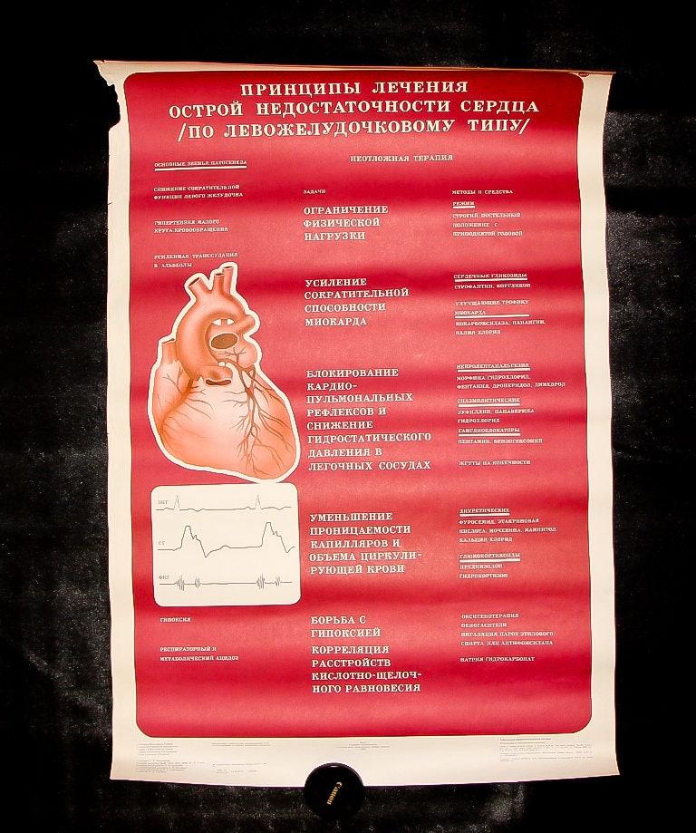 Gemütlich Medizinischer Anatomie Wörterbuch Bilder - Menschliche ...