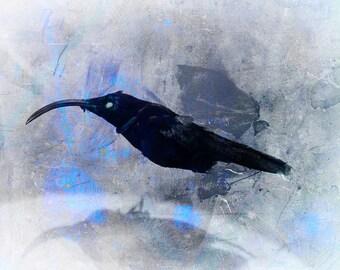 Bird Display Nature Dark Art Photo Print