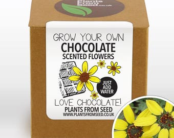 SALE NOW ON!!! - Grow Your Own Chocolate Scented Flowers Plant Kit