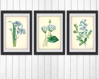 Botanical Print Set, botanical set of 3 Blue floral printable, instant download art, lovely home decor as an Instant Dowload