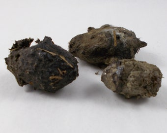 3 Owl Pellets to Dissect from Rodent Mouse Rat, Fur Whiskers Bones, Creepy Specimens