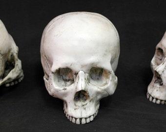 """Human skull """"Roger"""""""