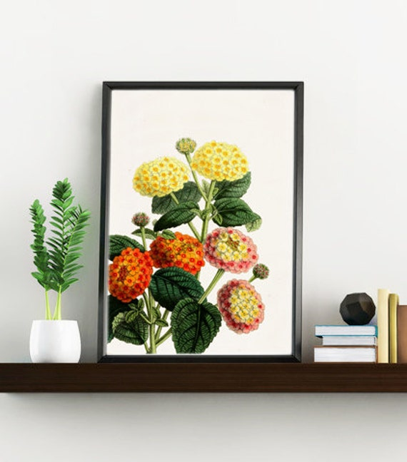 Wall art print Lantanas, Wall art, Wall decor, Home decor, Flower prints, Giclee print, Home decor, Digital prints flower,  BFL110WA4