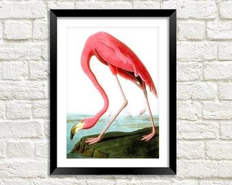 FLAMINGO BIRD PRINT: Vintage Pink Audubon Art Illustration Wall Hanging (A4 / A3 Size)