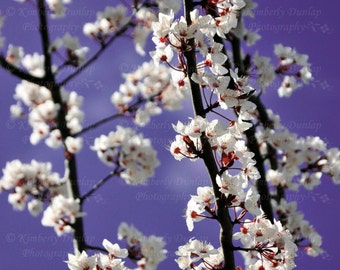 Spring Blossoms Photograph {Flower Photo, Floral Photography, Purple Pink White, Office Picture, Nursery Print, Tree Bud, Bloom, Blossom}