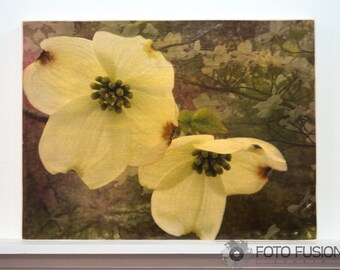 12x16 Flowering Dogwood: Mixed Media Photo Wall Art on Wood, Flower photography - ready to ship!