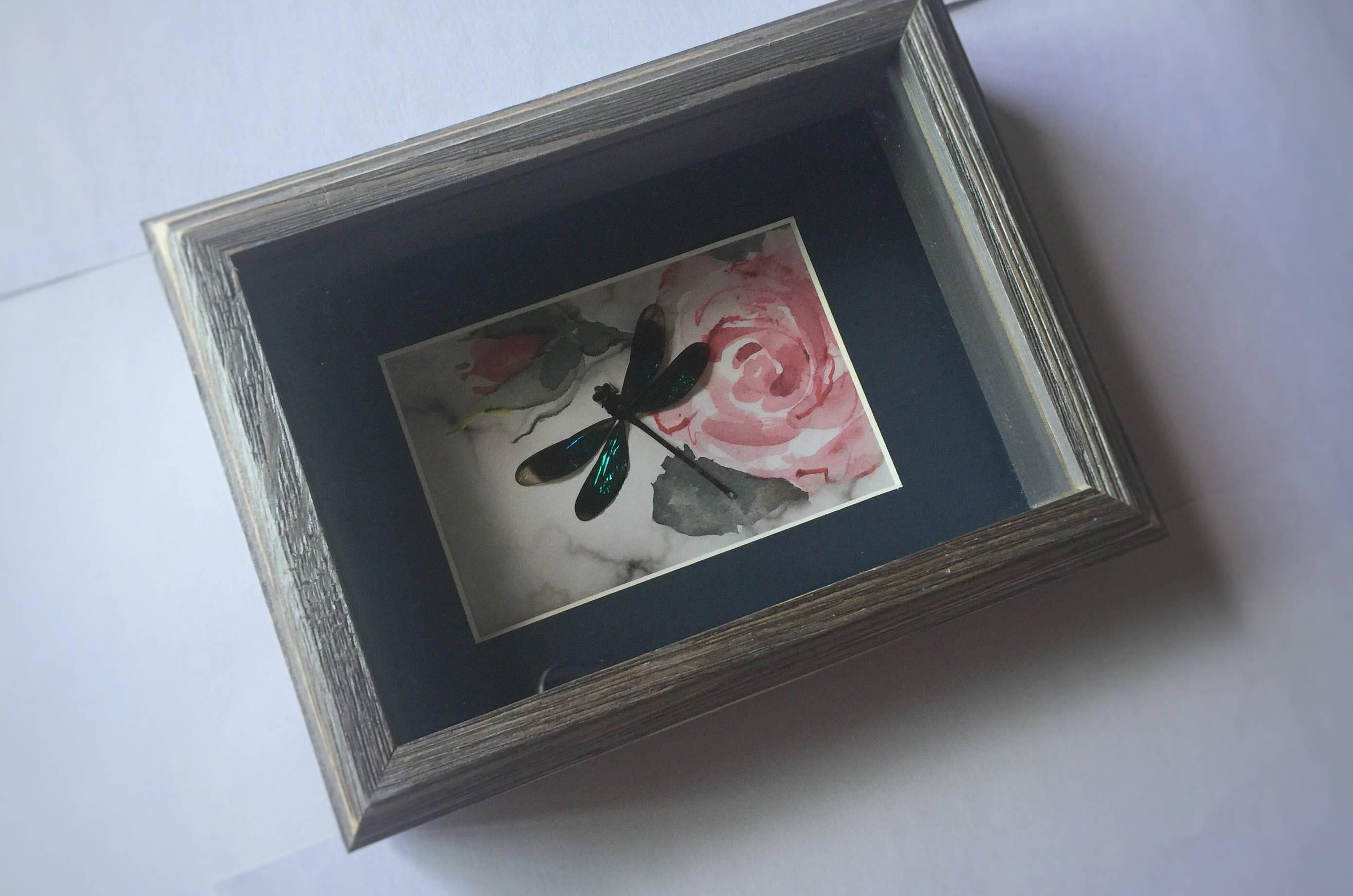 Enmarcado libélula libélula real arte insectos lepidópteros