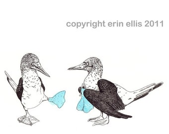 Blue-Footed Booby 8x10 Print