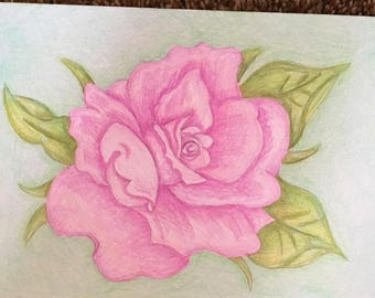Rose colored pencil drawing