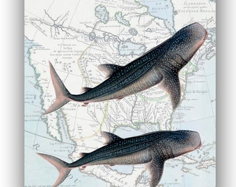 Whale Shark Print, North America map, 11x14, Nautical art, Collage  Print, Coastal Living, beach cottage decor, whale art, shark art