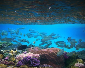 Tropical fish canvas, underwater, fish wall art, scuba,fine art photography, blue decor, colorful, nursery art, large canvas,canvas wall art
