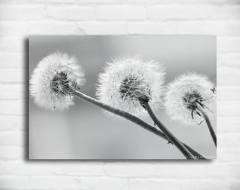"Dandelion Canvas Black and White  - dandelions gray grey wall art 16x24 large wall art 24x36 canvas wrap 8x12 flower wall decor - ""Yearning"""