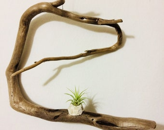 Driftwood Sculpture/Wall Hanging