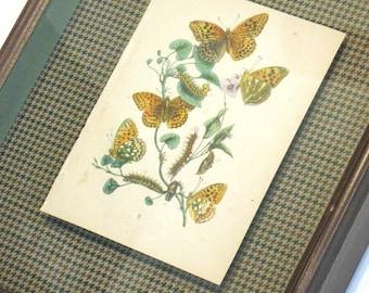 "Shadowbox Framed Antique Butterfly Print 13 X 16"" Botanical"
