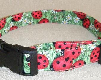 Ladybugs  - Dog Collar