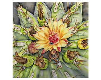 Cactus flower - fine art 40 x 40 cm, numbered and signed. Made from my watercolor