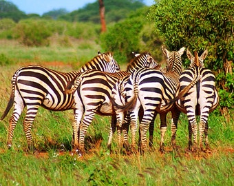 Kenya Photography - Kenya Safari - Safari photography - Zebra Print - Black & White - Group - Stripes - Wall Art - Kenya Decor - Safari Gift