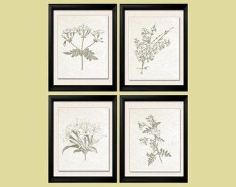 Botanical Prints, Sepia Brown, Botanical, Botanical Plates, Jasmine, Jasmine Prints, Modern Farmhouse Art, French Country Wall Art