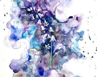 Blue Bell Portrait - matted print
