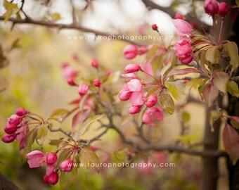 Spring Blossoms No. 3