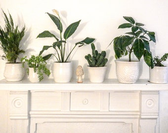 Glossy White Textured Cactus Pot