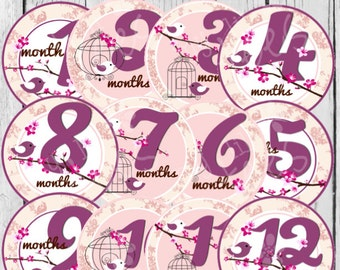 MONTHLY IRON ON Decals or Monthly stickers - 12 Monthly iron on heat transfers for Baby -Cherry Blossom Monthly Pack (Style#A37)