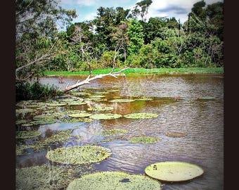 Photo 30X40cm pond in the Amazon rainforest in Brazil